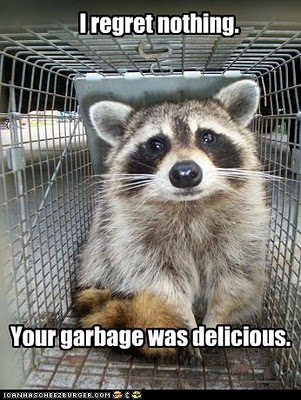 funny-pictures-raccoon-ate-your-garbage-