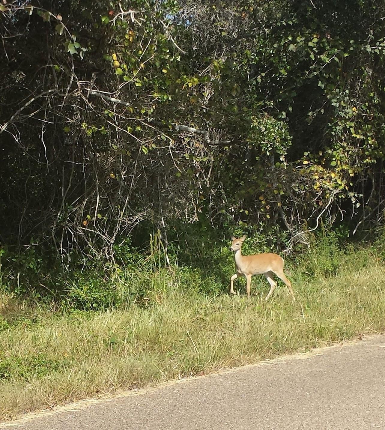 Hunting at aransas wildlife refuge texasgaga